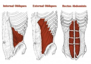 internal obliques and rectus abdominis